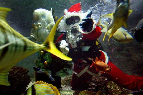 christmas_aquarium_france.jpg