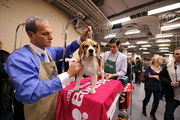 132th Westminster Kennel Club Dog Show in New York