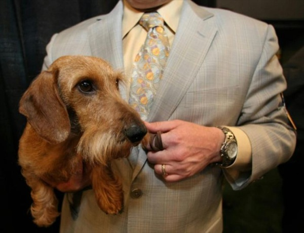 132westminster_kennel_club_dog_show06.jpg
