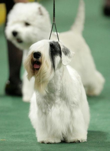 132westminster_kennel_club_dog_show09.jpg