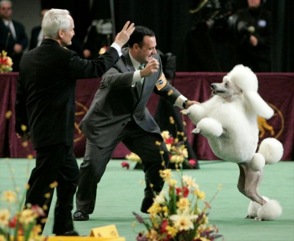 132westminster_kennel_club_dog_show10.jpg