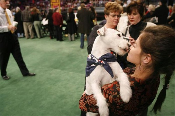 132westminster_kennel_club_dog_show11.jpg