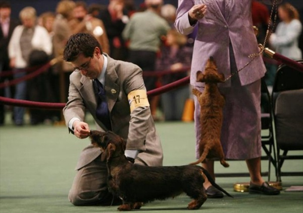132westminster_kennel_club_dog_show12.jpg