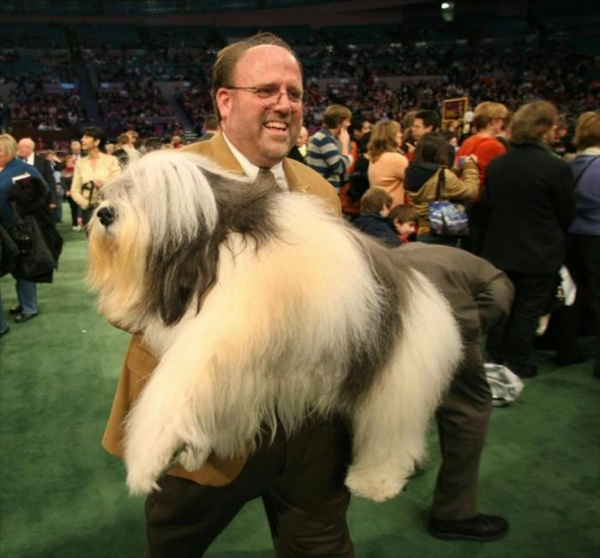 132westminster_kennel_club_dog_show15.jpg