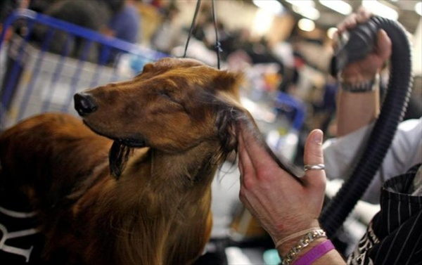 132westminster_kennel_club_dog_show20.jpg