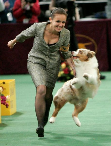 132westminster_kennel_club_dog_show21.jpg