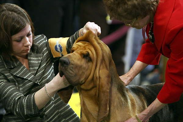 westminster_kennel_club_dog_show11.jpg