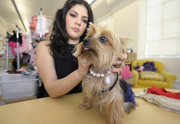 little lily pet fashion label presents oscar awards red carpet for dogs