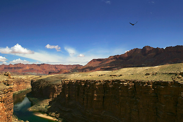 grand_canyon_flood07.jpg