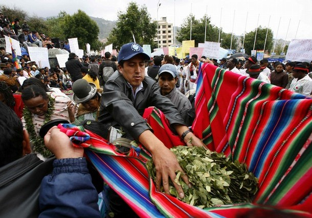 coca grower holds coca leaves during a protest against the U.N. coca report
