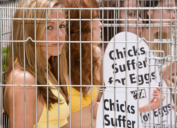 PETA: Chicks Suffer for eggs