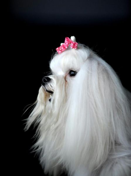miss_canine2008_other_contestants04.jpg