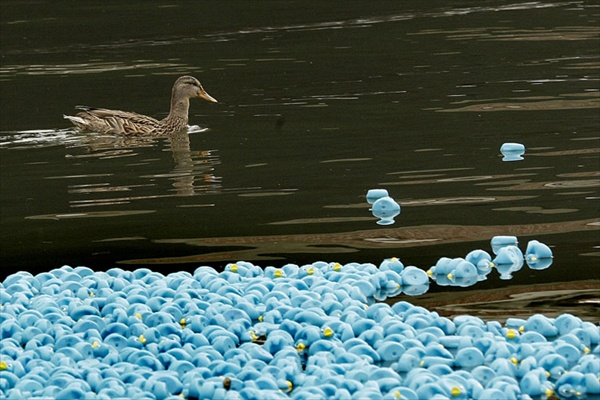 thames_rubber_ducks03.jpg