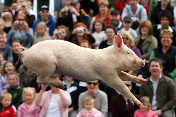 pigs_fly_royal_melbourne_show07.jpg