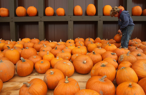 Pumpkin Mania in Germany