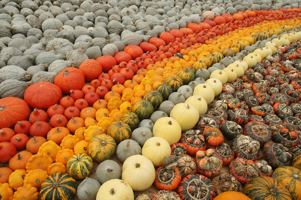 halloween_klaistow_germany_pumpkin_mania4.jpg