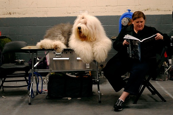 westminster_kennel_club_dog_show15.jpg