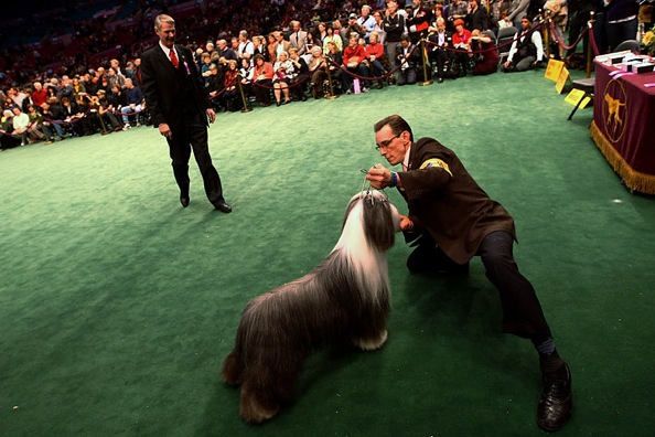 westminster_kennel_club_dog_show16.jpg