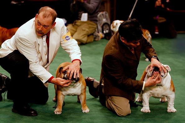 westminster_kennel_club_dog_show17.jpg