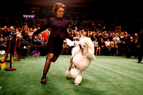 westminster_kennel_club_dog_show19.jpg