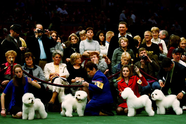 westminster_kennel_club_dog_show22.jpg
