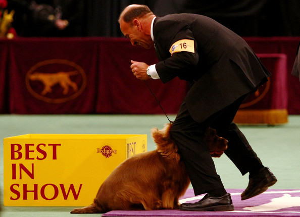 westminster_kennel_club_dog_show23.jpg
