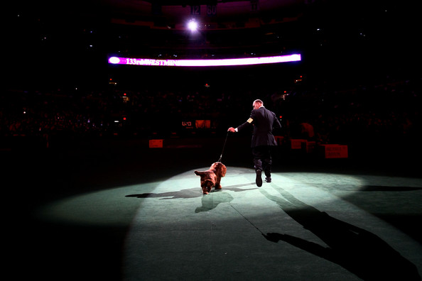 westminster_kennel_club_dog_show28.jpg