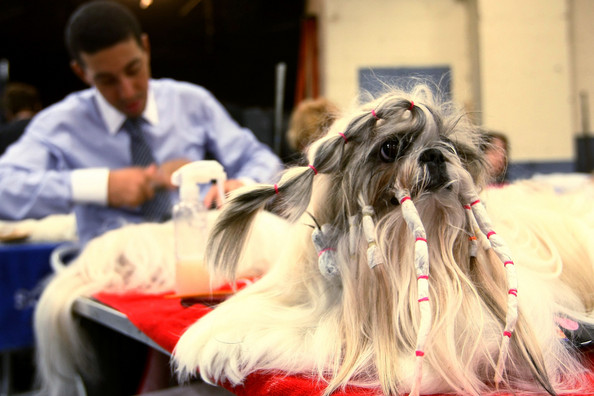 westminster_kennel_club_dog_show29.jpg
