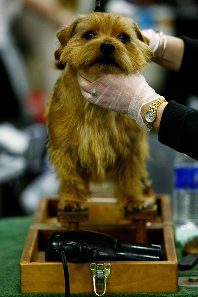 westminster_kennel_club_dog_show34.jpg