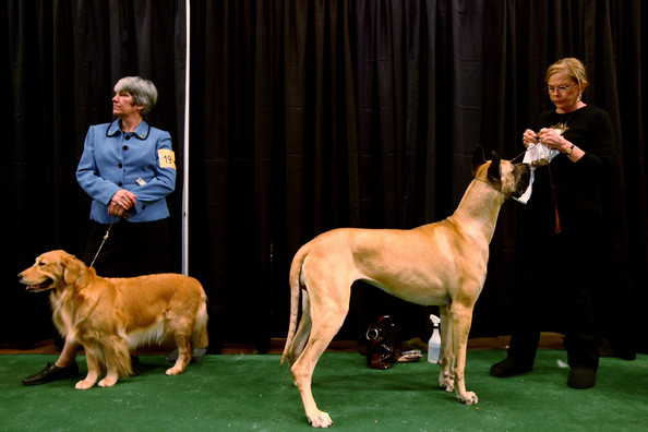 westminster_kennel_club_dog_show35.jpg