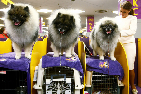 westminster_kennel_club_dog_show36.jpg