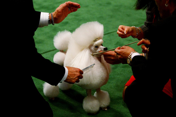 westminster_kennel_club_dog_show38.jpg