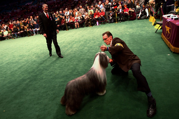 westminster_kennel_club_dog_show40.jpg