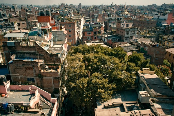nepal_kathmandu_the_city_and_a_tree_IMG_9705_600.jpg