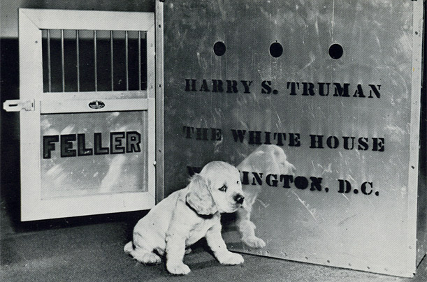 harry_s_truman_feller_cocker_spaniel.jpg