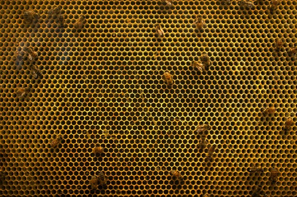 nz_bee_hive_structure_IMG_5642.jpg