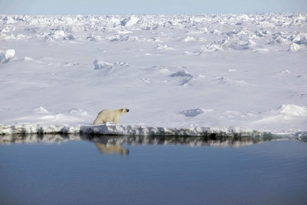 greenpeace_arctic_sunrise14.jpg