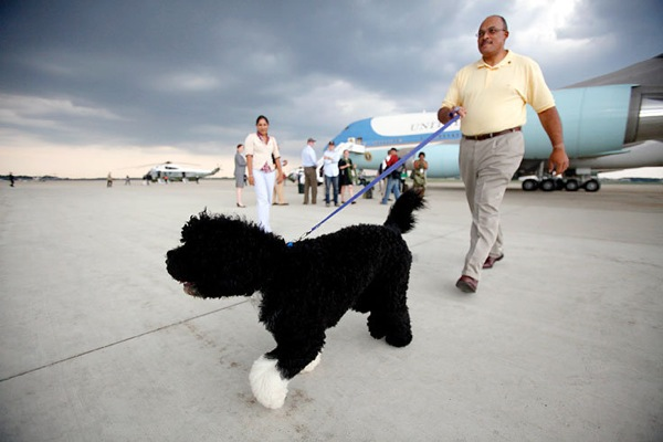 obama_vacation_dog_bo.jpg