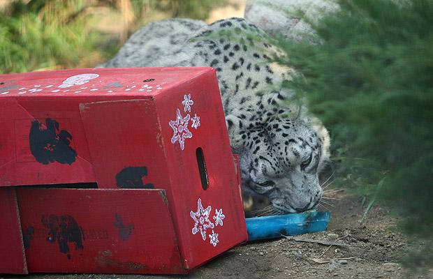 snow_leopard_la_zoo_botanical_gardens_california.jpg