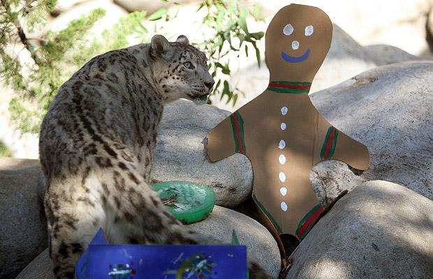 snow_leopard_la_zoo_botanical_gardens_california2.jpg