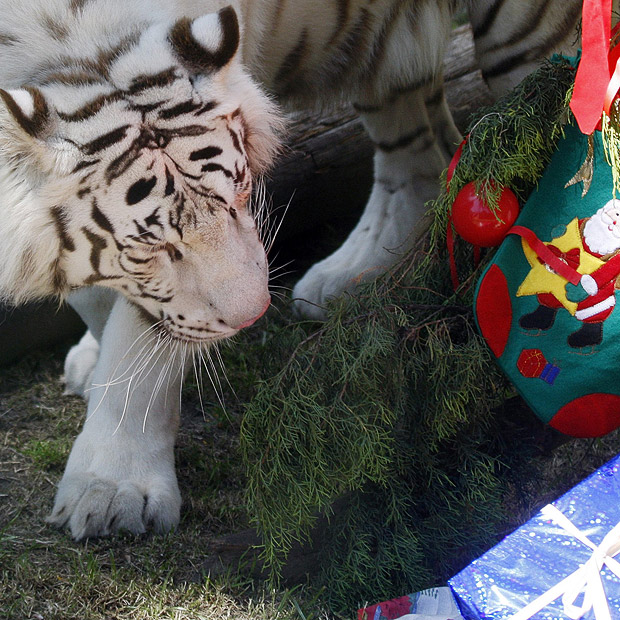 Christmas time at the Zoo
