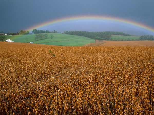 Rainbow Over Soybean Field by Raymond Gehman.jpg