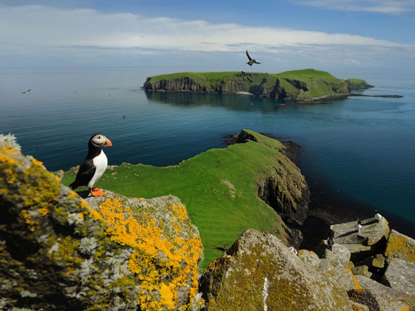 puffin-shiant-islands_13142_990x742.jpg
