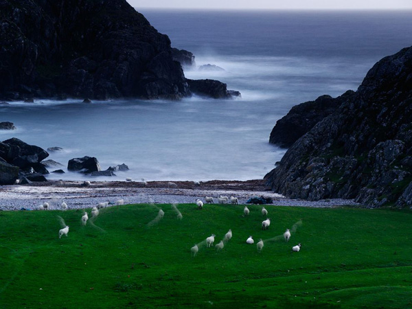 sheep-scotland_13185_990x742.jpg