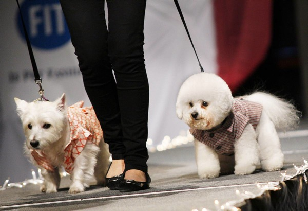 pet_apparel_fashion_show_new_york02.jpg