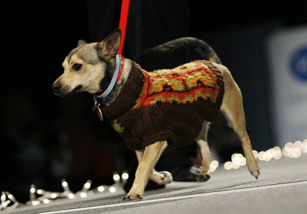 pet_apparel_fashion_show_new_york03.jpg