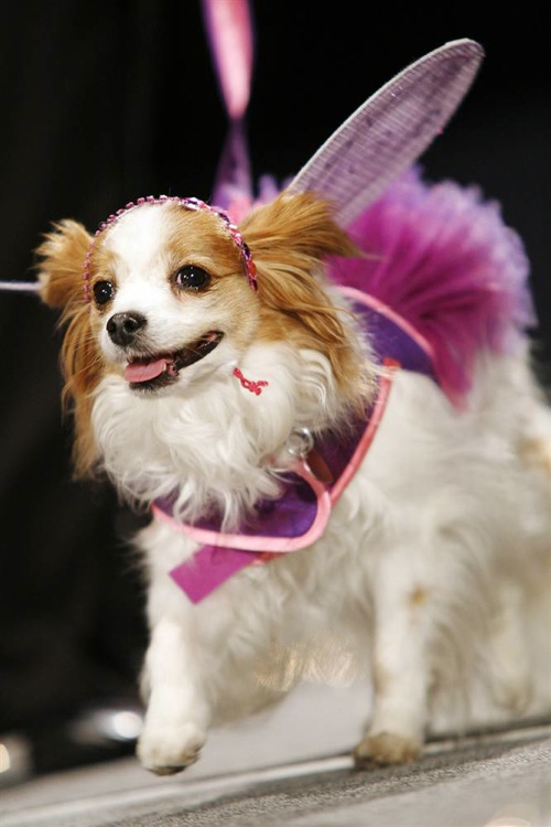 pet_apparel_fashion_show_new_york07.jpg