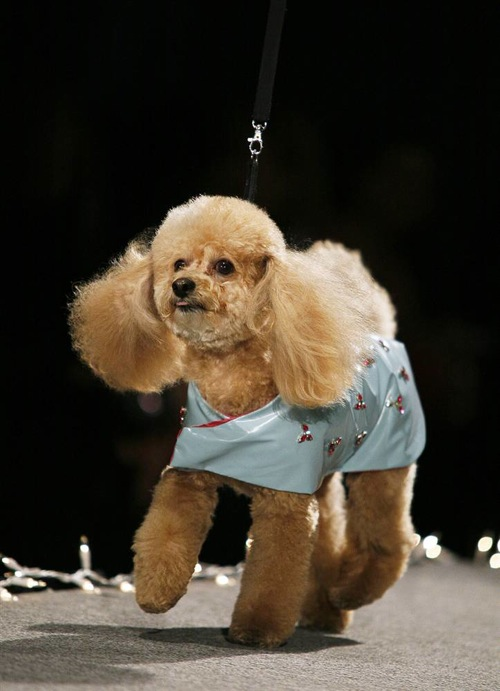 pet_apparel_fashion_show_new_york09.jpg