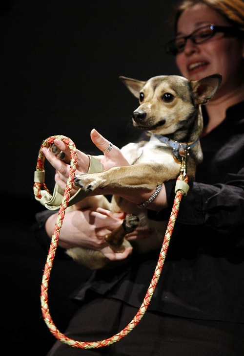 pet_apparel_fashion_show_new_york10.jpg
