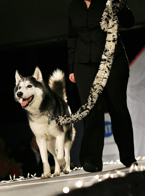 pet_apparel_fashion_show_new_york11.jpg